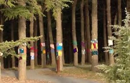 woolly tree